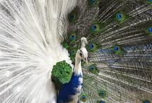 amazing animals / by Karen Bebee