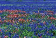 Flowers / by jacksonjay