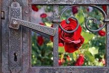 Gates, Doors & Windows / by Laloofah Ⓥ
