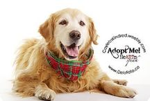 Adopt and Save a Life / by Julie Burge