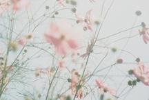 * Blossom * / by Mariana Bonilla