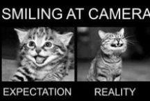 Cats / As coisas mais engraçadas que os gatos fazem? / by Isabel Pinheiro