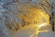 winter / de stilte in de winter  / by Polly Weitering