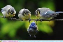 Birds / by Vicky Stanton