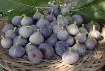 Figs, Figs & Figs / Healthy,delicious & beautiful, that's figs! / by Amy Calles