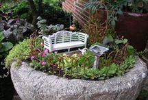 Minature Gardens, Terrariums, Bonsai Trees / by Marsha Kelly