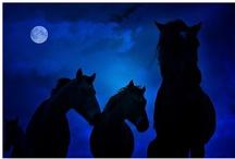 HORSES!! <3 / by Allison Johnson