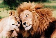Big Cat Lion Royals / by Lina Suppa