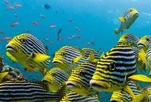 Organisms in the seaⅠ(1~400Pin) / by R,Kajiki