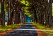 The way to ... / by Maria Meco