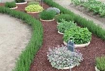 Inspiring garden beds/pots / by Lez PJ