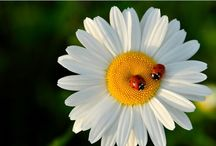 Ladybugs, Butterflies and our Elizabeth / Learn more about PDCD and what you can do to help these children. / by Janet Kee