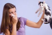 Sneeze & Wheeze Triggers / by American College of Allergy, Asthma & Immunology