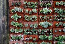 Vertical Gardens / by Gardenista