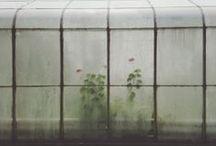 Greenhouses / by Gardenista