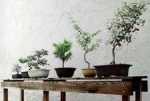 Bonsai / by Gardenista