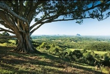 Insider Guides to Queensland / by Queensland
