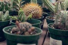 Succulents / by Gardenista