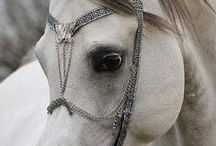 Horses / by Charleen Wert