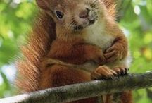Hokey Smokes! / Squirrels. What else? / by sharyl Strong