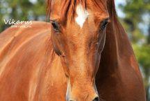 Horse / by Anastasia Zylka