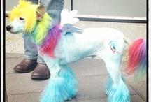ThinkGeek My Little Pony / by ThinkGeek