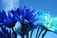 daisies....my favorites / by Havasu Blue (dEE)