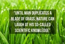Quotes for Lawn Lovers / by TruGreen