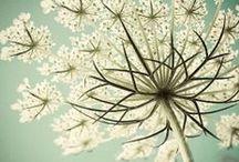 F L E U R S / ... organic ... nature ... / by Binki Borg