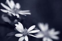Fleurs / by e l i s a b e t h