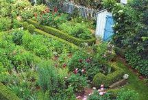 Inspiration - garden / by Claire Derouin