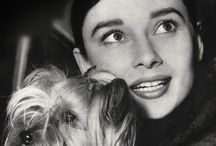 Beautiful Audrey H. / by D R E A M E R
