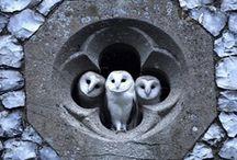 owls / by Elisa Castellani