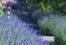 garden / by Linda Smeds