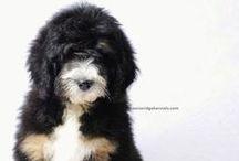 puppy love / by Zoe Wylychenko