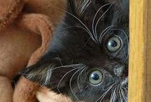 kittens... / by Zoe Wylychenko