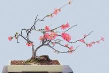 Gardening - Bonsai / by Mandala Mai