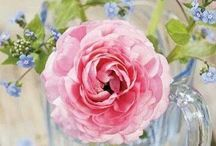 Flowers / by Kayo Jow