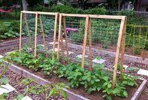Gardening by Greensisterhood / Grow your own food.  / by Green Sisterhood
