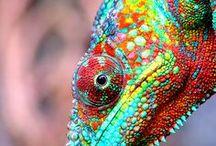 reptiles & amphibians  / by Judith Lombardi