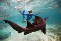 Shark Week  / One of our favorite weeks of the year - Shark Week! / by SwimSpot