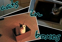 Cats in Boxes / Who doesn't love to watch a cat in a box?  / by Cindy O'Dear