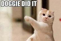 Feline Funnies! / by Cindy O'Dear