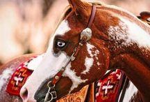 Horses & More Horses..... / by Cynthia Riza