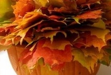 FALL / by Norma Arvizu