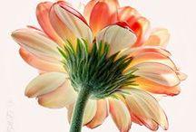 flowers / by Ania Grela
