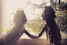 bearded dragons lol / by shirlee payne