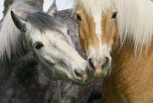 equus / by Liz Miller - Artful Endeavors