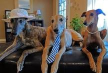 Greyhound Love / love~love~love~ love~ that's me and my greyhounds,  Depeche and Alev  / by Beth Huntington
