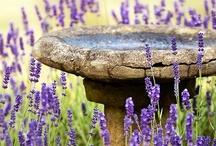 Lavender / by Cornel Slabber